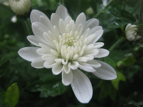 Ziedu horoskops: kādas puķes viņām patīk