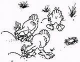 Hens Coloring Chooks Hen sketch template