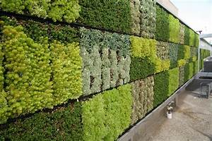 Mur Végétal Extérieur : tjsl 39 s green wall is here thomas jefferson school of law ~ Premium-room.com Idées de Décoration