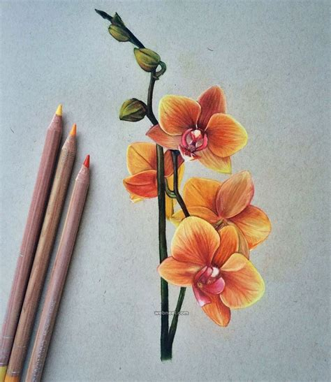 Coloring Flowers With Colored Pencils by 50 Beautiful Color Pencil Drawings From Top Artists Around