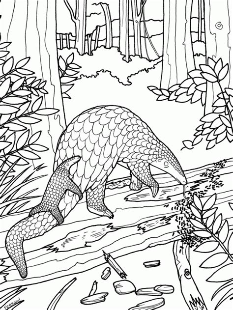 biology coloring pages coloring home
