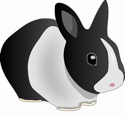 Clip Rabbit Hewan Kelinci Gambar Kartun Putih