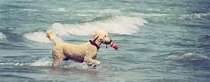 Urlaub Mit Hund In Ostfriesland Unterkunft Mit Haustier