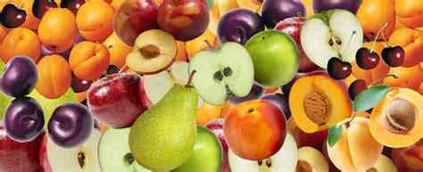 fruits with pits toxic foods to dogs furblogz furblogz