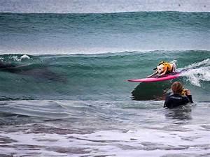 Shark Shows Up At Hb Pier Snakes Surfing Dog Surflinecom