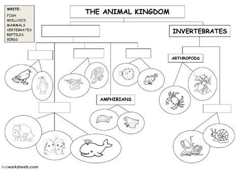 the animal kingdom classification diagram animal