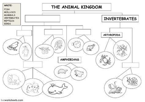 The Animal Kingdom  Classification Diagram Animal Classification Diagram Worksheet