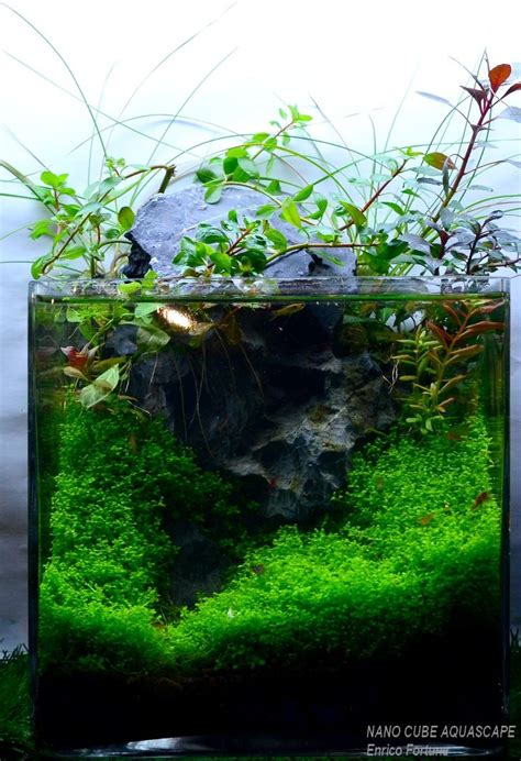 352 Best Images About Aquascaping On Pinterest Plants