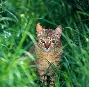 Katzen Fernhalten Von Möbeln : katzen kennen menschen gut welt ~ Michelbontemps.com Haus und Dekorationen