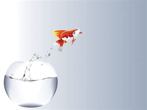 fish  jumping  powerpoint templates animals