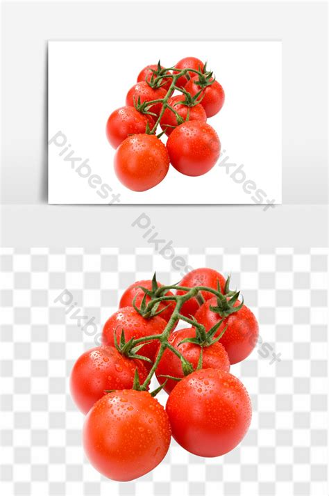 mewarnai gambar pohon tomat
