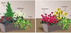Plantes D Hiver Extérieur Balcon : plantes hivernales pour balcon pivoine etc ~ Nature-et-papiers.com Idées de Décoration
