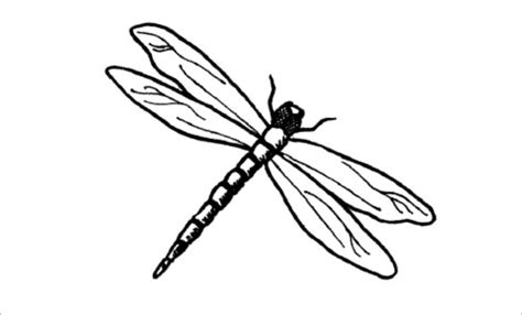 dragonfly template 10 dragonfly templates crafts colouring pages free premium templates