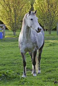 HD Animals Wallpapers: White horse Wallpapers