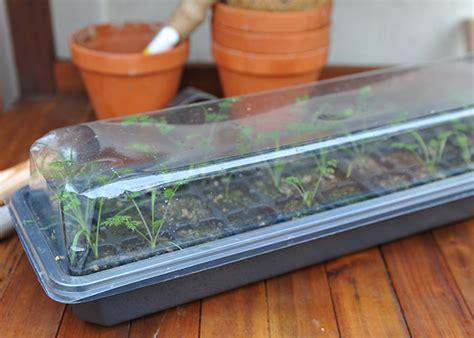 seed windowsill plant kit raising trays pots growing lg pr