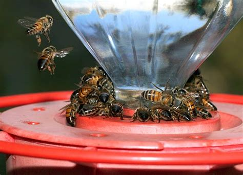 creature comforts pet sitting service bee stings