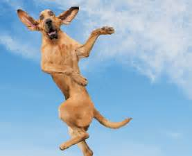 mountain homes interiors 10 flying dogs that will make you smile quarto homes