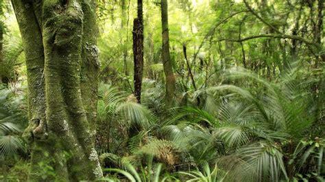 mitten im urwald die pagsanjan falls paradiside