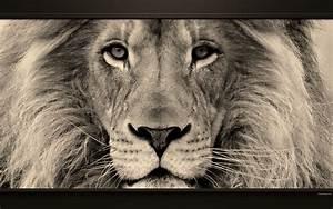 Tableau Lion Noir Et Blanc : 3 animaux animaux sauvages ~ Dallasstarsshop.com Idées de Décoration