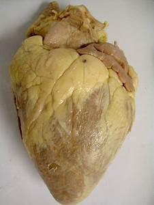 A U0026p Sheep Heart Pics