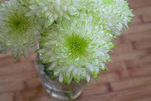 white and green dahlia flower free image Peakpx