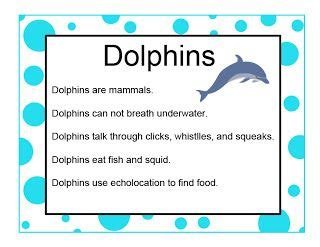 dolphin facts  songs  craft ideas dolphin craft