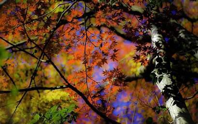 Desktop Artsy Backgrounds Fall Background Autumn Leaves