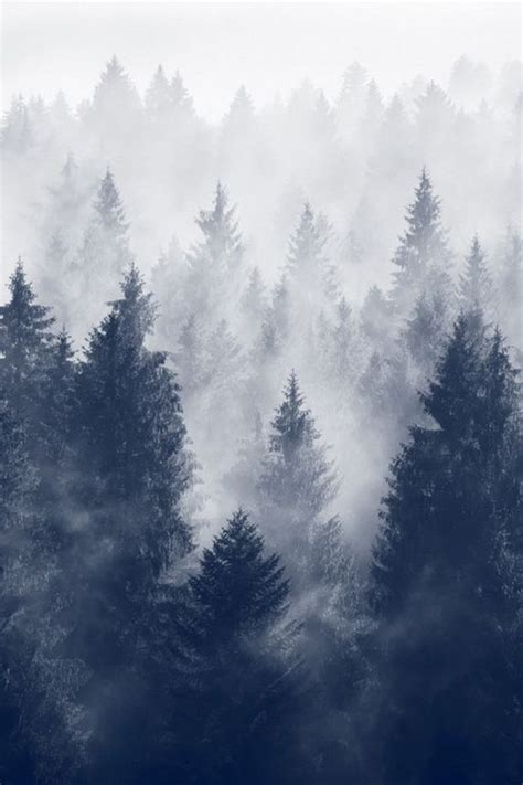 Foggy Evergreen Forest Wallpaper Fog Of The Forest Pictures Photos And Images For Facebook Tumblr Pinterest And Twitter