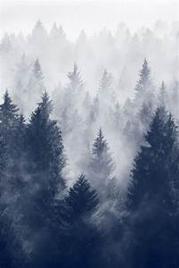 Fog Of The Forest Pictures, Photos, and Images for ...