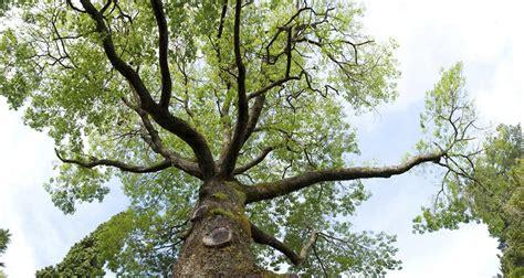 liable  invasive roots bankratecom