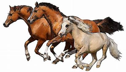 Horses Horse Clipart Running Clip Silhouettes Cliparts