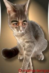 lustige katzenbilder ulk gag spass cat