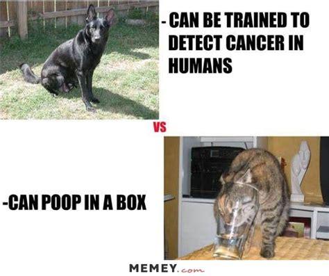 poop memes funny poop pictures memeycom