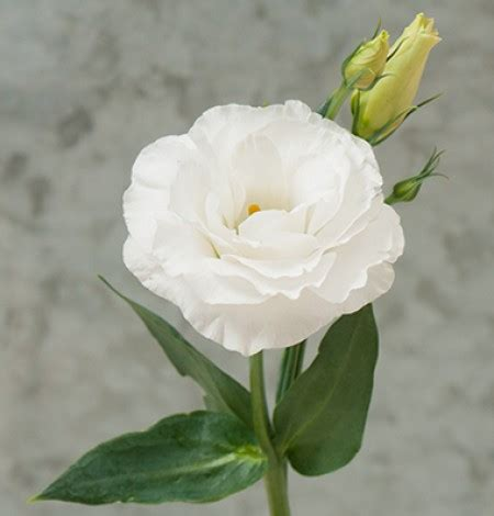 immagini di fiori bianchi fiori bianchi idee organizzazione matrimonio forum