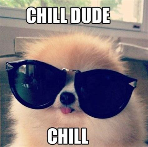 Chill Out Meme - chill meme funny pictures lol comics and jokes great animal pics pinterest puppys