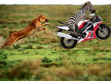 Funny Lions « Funny World
