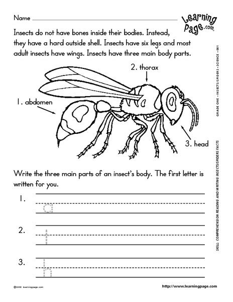 reading and writing about insects worksheet for 1st 2nd grade lesson planet