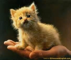 tiny cats tiny kitten cats picture