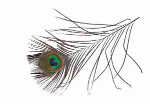 peacock feather large Vector by IdunaHayaPhotography on ...