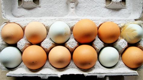 organic eggs here s why your brown eggs have more blood spots than white ones quartz