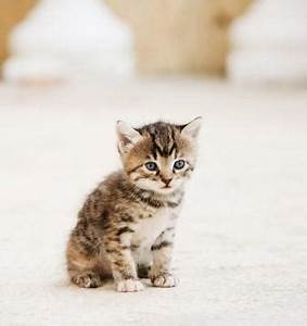 Smallest Cat in the World   LoveToKnow
