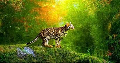 3d Animated Wallpapers Cat Windows Motivational Hindi