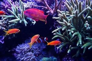 Transportbox Für Fische : fische f r das riff aquarium ~ Michelbontemps.com Haus und Dekorationen