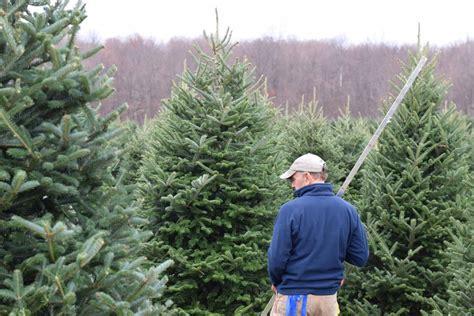 chuck hafners christmas trees evergreens chuck hafner s garden center syracuse