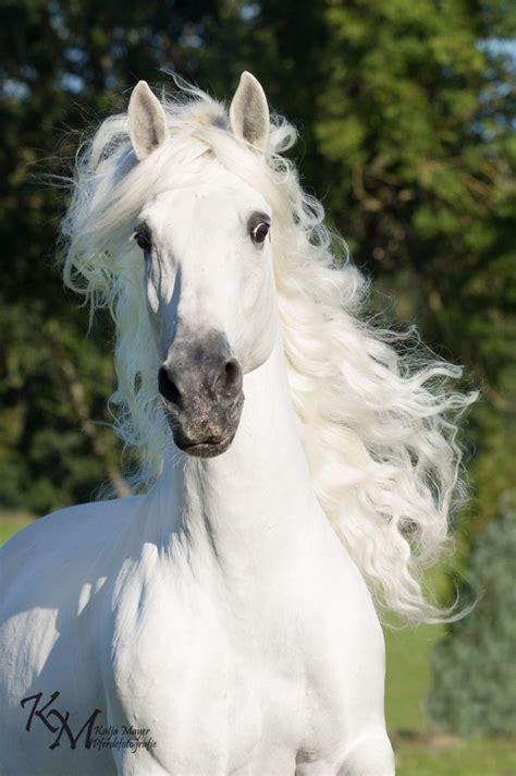 horse majestic horses animals