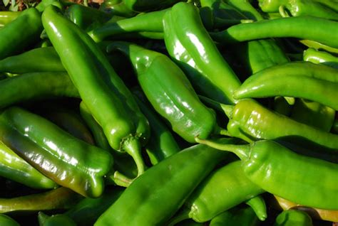 green chili pepper growing hot peppers how to grow hot peppers growing chilies