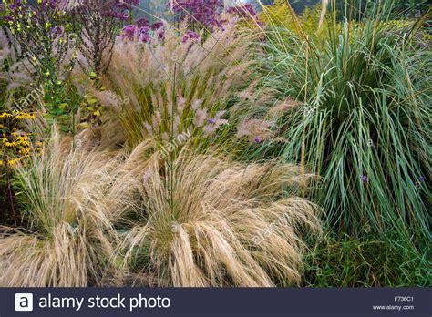 border grasses for landscaping ornamental grasses in garden border in autumn stock photo royalty free image 90425329 alamy