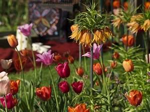 Wann Blühen Narzissen : der herbst ist eine besondere jahreszeit blumenzwiebeln und knollen kann jeder pflanzen ~ Eleganceandgraceweddings.com Haus und Dekorationen