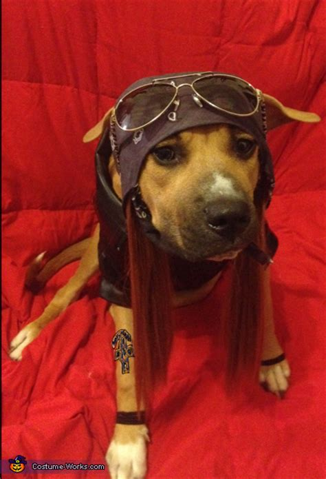 axl rose halloween costume ideas  dogs