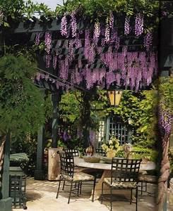 Pflanzen Für Pergola : pergola garten sichtschutz romantik blauregen umrankt garten pinterest pergola ~ Sanjose-hotels-ca.com Haus und Dekorationen